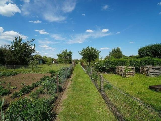 2,5 ha der Kleingartenanlage ´Zur Erholung´ ca. 15 km von Halle (Saale) entfernt **Jahresnettopacht € 2.000,--**