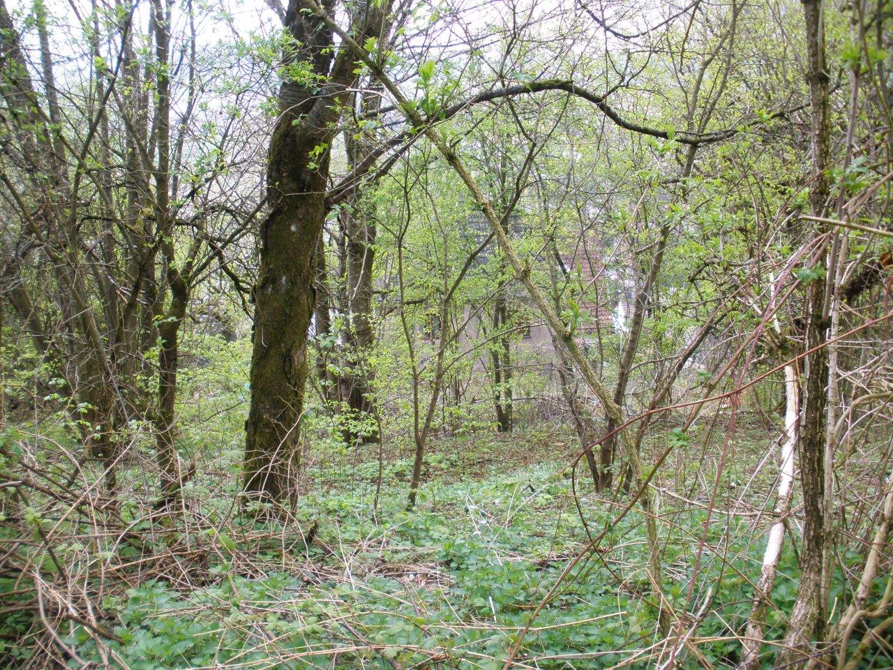 Grundstück neben Wohnbebauung in Hanglage mit Blick bis nach Oberfranken