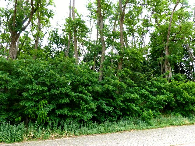Holzungsfläche in westlicher Ortslage von Meuro