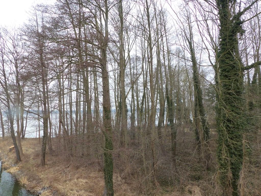 Grundstück am Dolgensee neben Wochenend-/Ferienhausbebauung etwa 24 km von der Berliner Stadtgrenze entfernt
