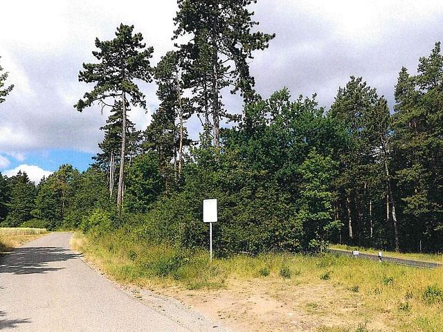 Über 5,3 ha Waldfläche in Unterfranken