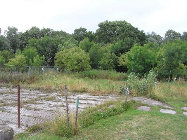 Grundstück im Ostseebad Breege auf Rügen - überwiegend mit Wildwuchs und Bäumen bewachsen, teilweise Grünland