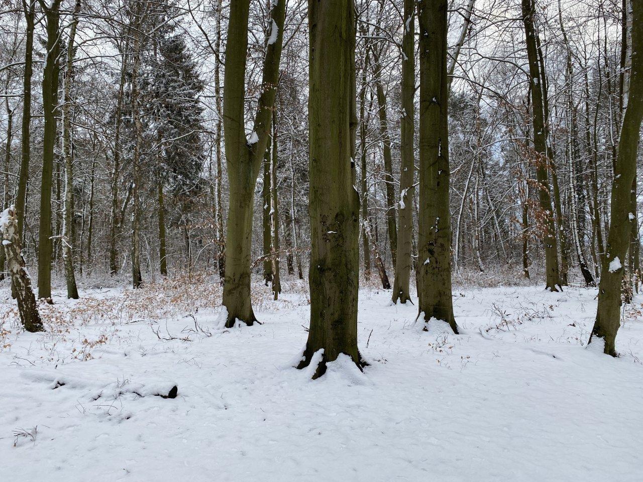 Waldfläche am ´Großen Storkower See´ nahe einer Bungalowsiedlung und Kleingartenanlage