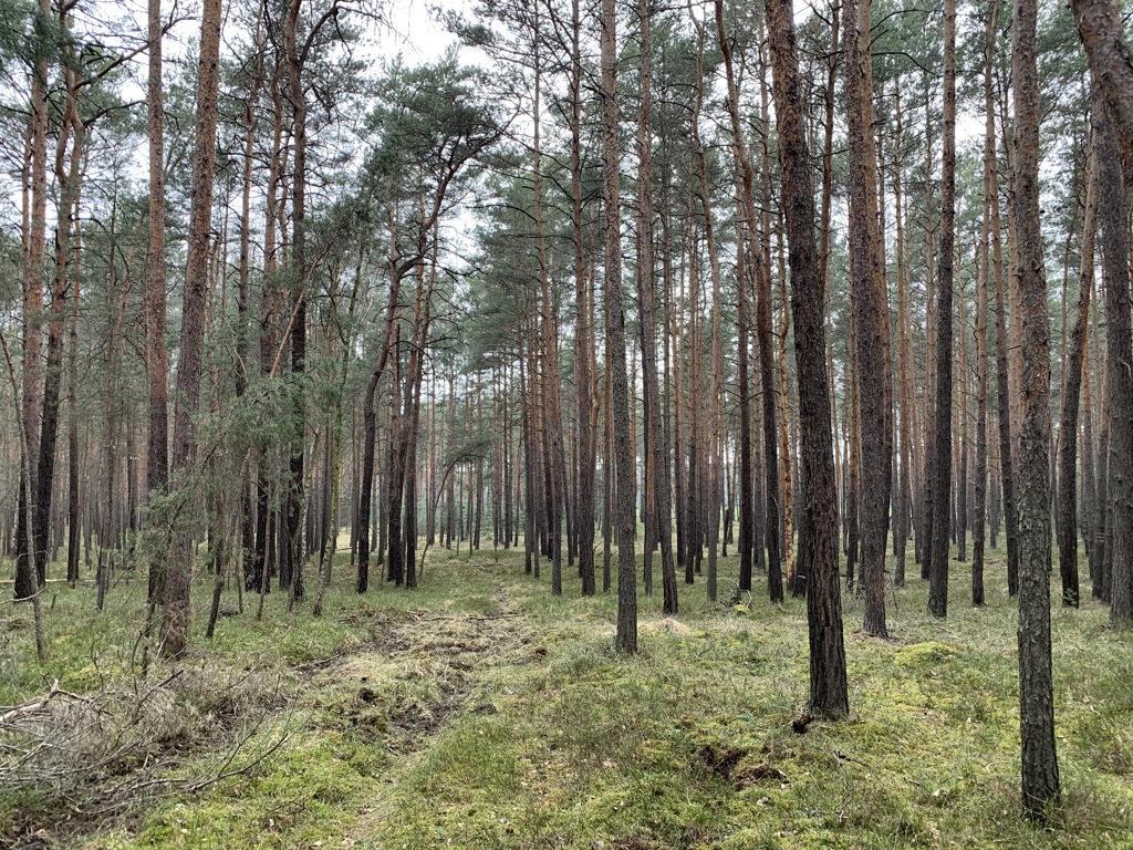 Vertragsfreie Waldfläche mit einer Grundstücksgröße von etwa 4.600 m² nahe dem Kraftwerk Boxberg