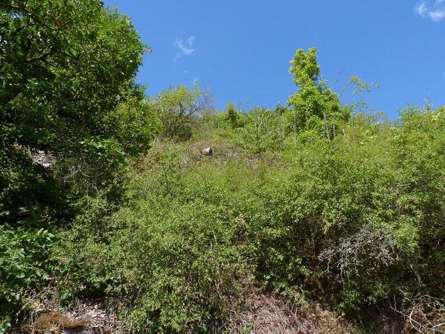 Mit Büschen und Bäumen bewachsene Hangfläche neben Weinbergen oberhalb der Mosel mit herrlichem Ausblick