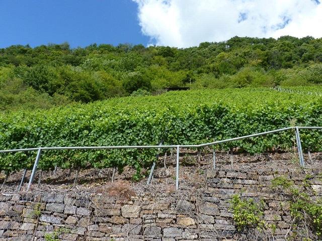 Hanggrundstück in hervorragender Weinbergslage ´Bruttiger Götterlay´ an der Mosel - vertragslos teilweise als Weinberg genutzt