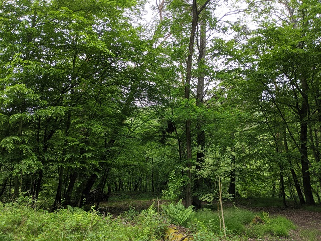 Waldfläche am ´Thalbach´ im Hunsrück